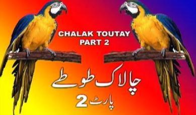 chalak toutey 2